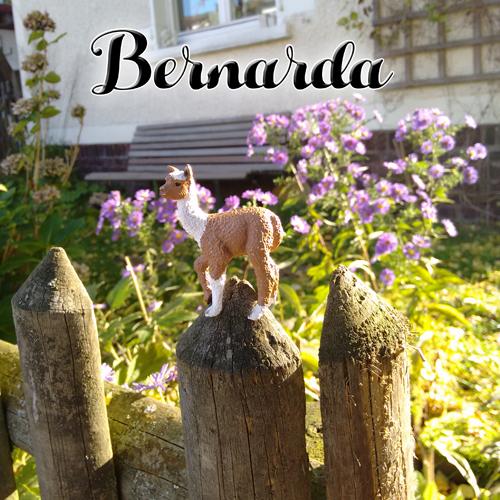 Bernarda @ SPIEL15